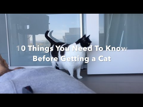 10 Things You Need to Know Before Getting a Cat