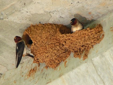 How To Prevent Swallows From Building Nest On Your Porch
