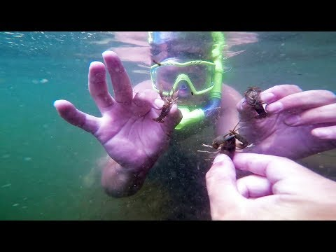 Diving For Our Own Bait + BIG FISH!