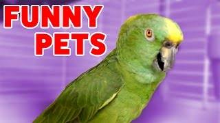 Funniest Pets & Animals Home Video Bloopers of 2016 | Weekly Compilation