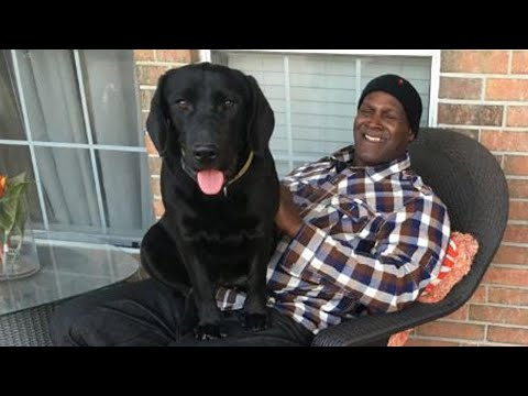 Exonerated Man Reunites With Puppy He Had Raised in Prison