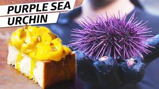 Harvesting Purple Sea Urchin (Uni) on the Oregon Coast – Deep Dive