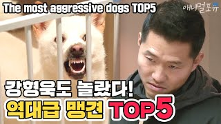 [ENG SUB] Showdown with The most aggressive dogs TOP5 [Dogs are incredible] [It like a Cesar`s show]