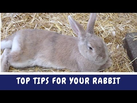 Rabbit Tips   Top Tips For Your Rabbit