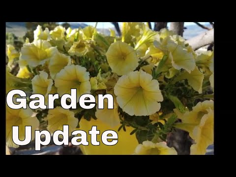 June Garden Update With Linda's Pantry