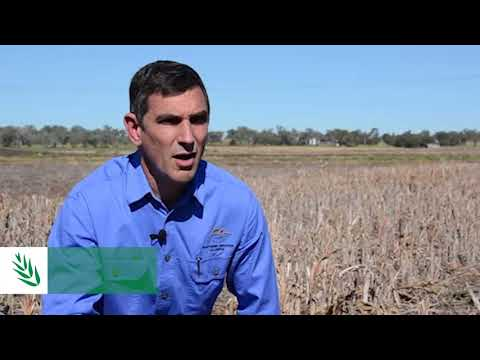 Looking to boost moisture with ground cover? p.1 – R.Daniel | 2018 Know More | Northern Region
