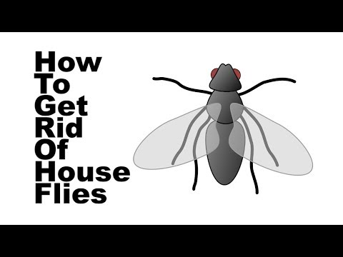 Home Remedies for Flies | How to Get Rid of Flies in the House