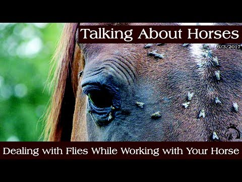 Dealing with Flies While Working with Your Horse