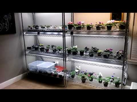 African Violets.......my simple set up