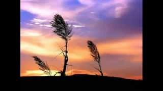 تلاوة خاشعة - سورة الرحمن , الشيخ محمد ايوب