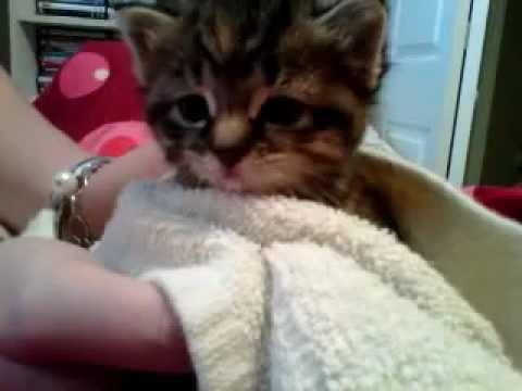 Kitten burping @ 3 weeks old