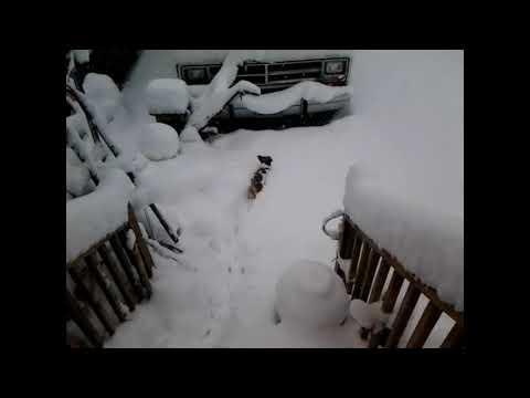 Jack and tercel Jan 2018 snow