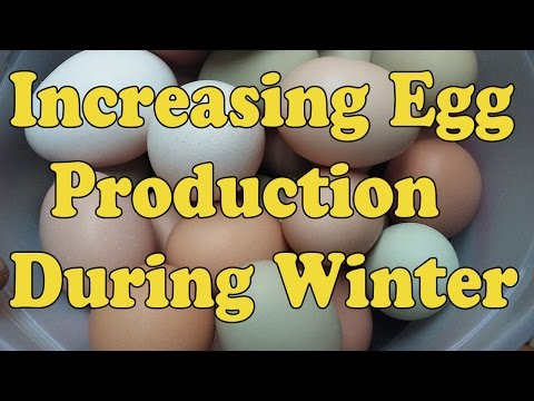 How To Increase Egg Count During Winter Months