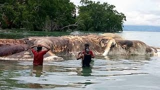 Mysterious Creature Found on Beach and More !