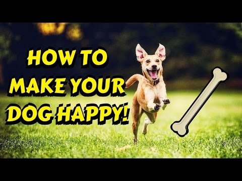 How to make your dog happy!