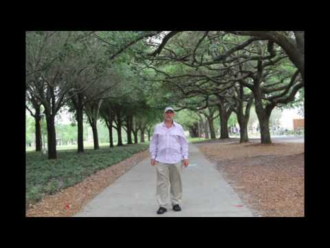 Quercus virginiana - 'Live Oak' tree For Sale in South Florida