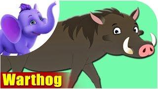 Warthog - Animal Rhymes in Ultra HD (4K)