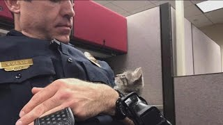 Police Sergeant Adopts Adorable Kitten Found by Officer on Patrol
