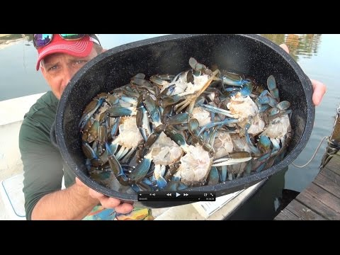 killing and cleaning live crabs. humanely!!!