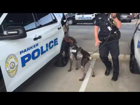 Drug Sniffing Canine Cop