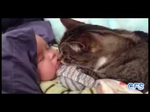 Puppies with kittens fighting about babies of vine comp  Aug 2015