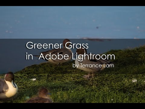 Greener Grass in Adobe Lightroom 5.7.1 - E0008