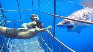 Crazy Zoo Videos - TRY NOT TO LAUGH IMPOSSIBLE | LIFE FUNNY PETS 🐯🐶