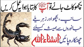 Download Scorpion Treatment According to Hazrat Muhammad SAW | bichoo k katny ka wazifa Video