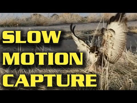 Slow Motion -- Hawk Capturing Bunny