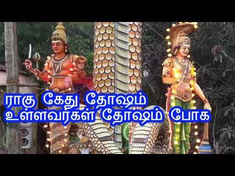 ராகு கேது தோஷம் உள்ளவர்கள் தோஷம் போக rahu kethu thosam pariharam | rahu ketu dosha problems in tamil