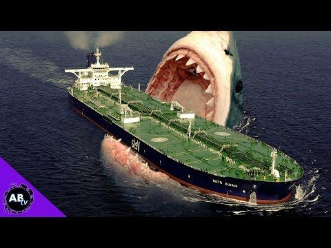 TOP 5 CRAZIEST SHARKS ALIVE!  5 Weird Animal Facts