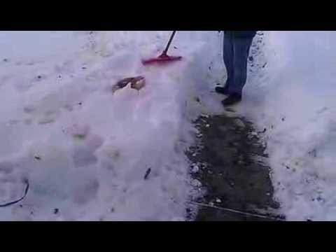 How to Easily Manage Dog Poo In The Winter