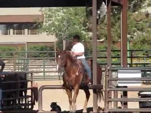 Team Roping Horse For Sale by www. jakebarneropehorses.com
