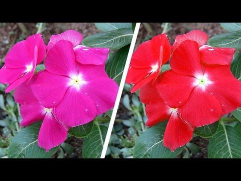Changing Colors | Photoshop CC