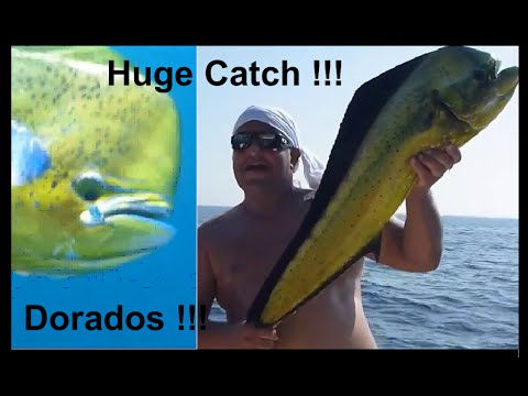 Fishing Adventures #93 - Huge Catch ! Tournament Fishing in Fujairah