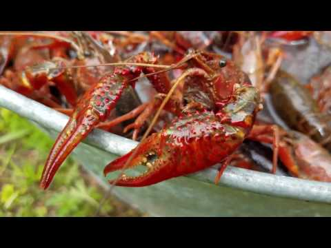 How to Boil Crawfish: One Louisiana Way