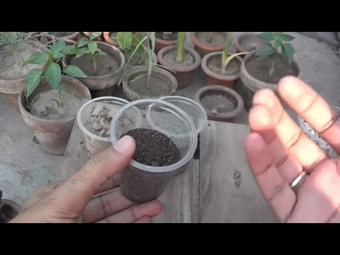 Potting Soil Information | Well Drained Soil Potting Mix | Make Potting Mix (Urdu/hindi)