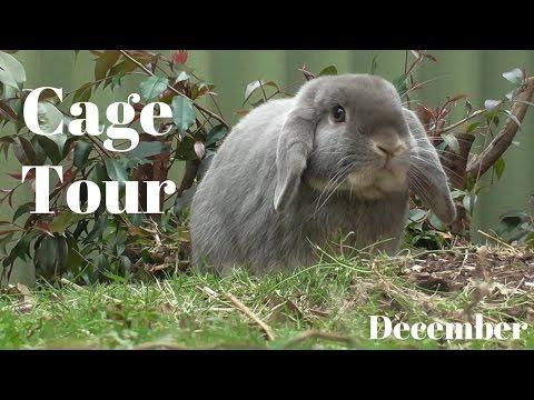December Cage Tour