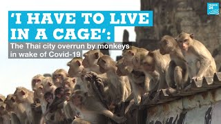 'I have to live in a cage': The Thai city overrun by monkeys in wake of Covid-19