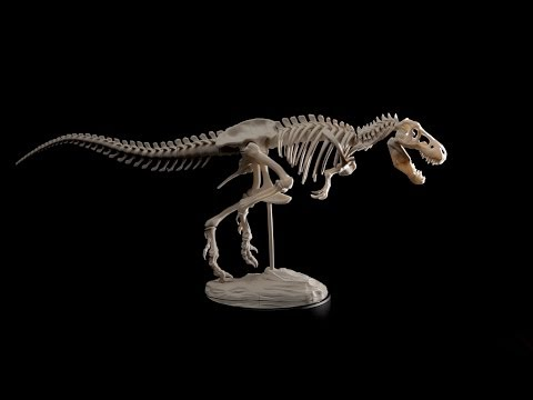 T-Rex Skeleton 360 Degree Rotation