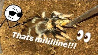 FEEDING my TARANTULAS these ANNOYING CRICKETS !!! ~ That's MINE !!!