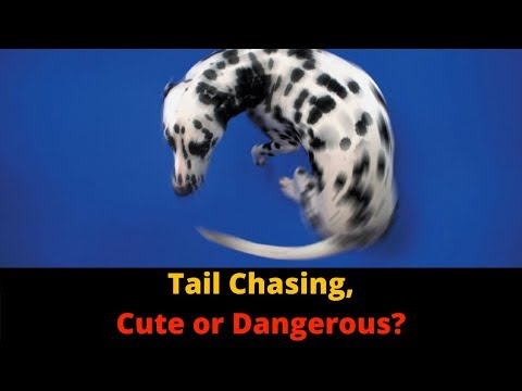 Why Do Dogs Chase Their Tails? Is It Normal?