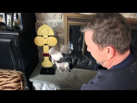 Squirrel Removal from Fireplace: Croton NY: Intrepid Wildlife Services