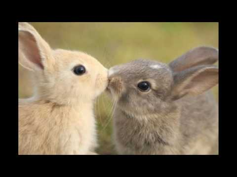 ALL CUTE RABBITS IN HERE