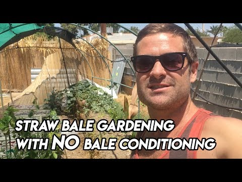 Ep164 - Straw Bale Gardening with NO Bale Conditioning!