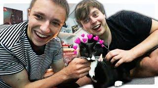 Adoptovali jsme si Koťátko