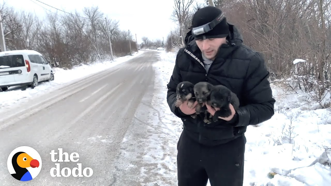 Brave Mama Dog Asks Strangers To Save Her Babies | The Dodo