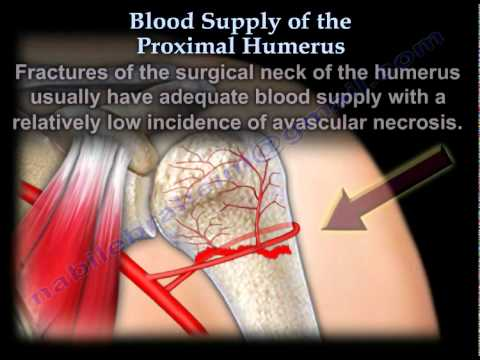 Blood Supply Of The Proximal Humerus - Everything You Need To Know - Dr. Nabil Ebraheim