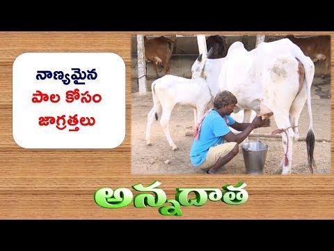 Tips for Quality Maitenance of Milk || ETV Annadata