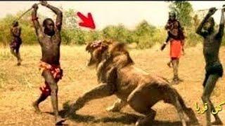 #x202b;شاهد صراع الحيوانات مع البشر !! شئ لا يصدق#x202c;lrm;